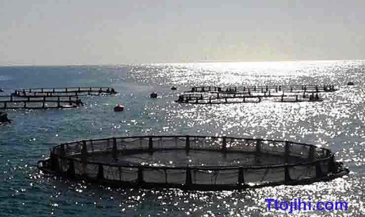 تصویر قفس ثابت و شناور پرورش ماهی