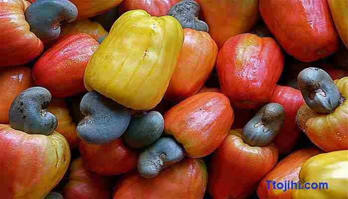 تصویر کاشیو میوه بادام هندی
