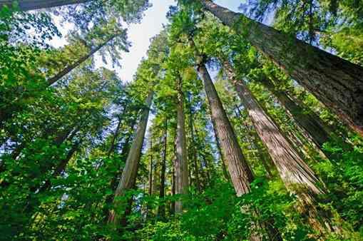 تصویر طرح پرورش درخت تصویر