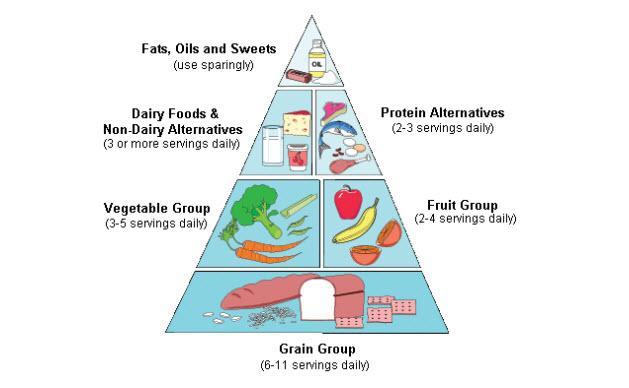تصویر هرم غذایی و نقش جوانه حبوبات