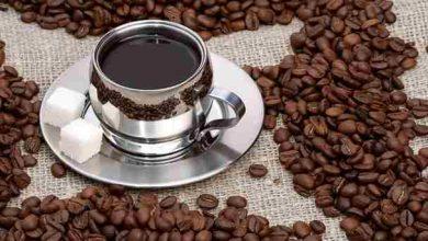 تصویر از آموزش کامل پرورش گیاه قهوه منبع محبوب ترین نوشیدنی در جهان