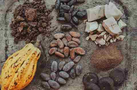 تصویر انواع دانه های درختان کاکائو