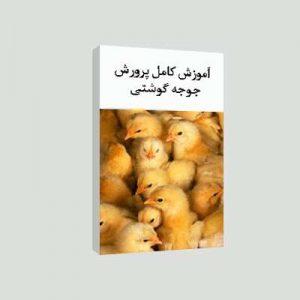 آموزش کامل طرح پرورش مرغ گوشتی