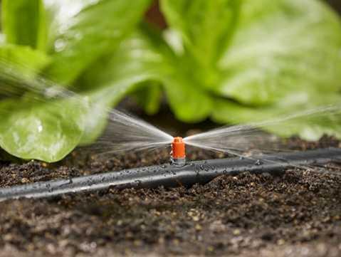 تصویر سیستم آبیاری قطره ای