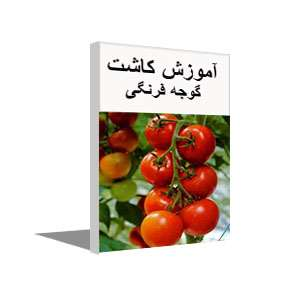 پکیج آموزشی تولید و پرورش گوجه فرنگی