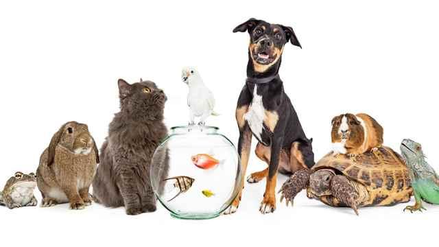 طرح پرورش و فروش انواع حیوان خانگی ایده ای پرسود