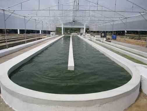 تصویر استخرهای چرخشی تولید جلبک اسپیرولینا