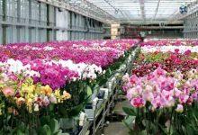 پرورش گیاه ارکيده یک طرح سرمایه گذاری پر سود