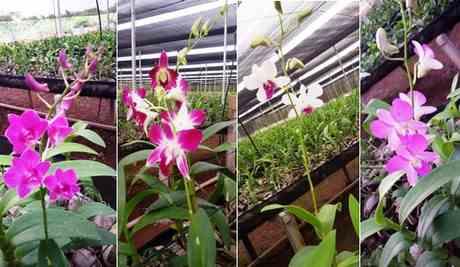پرورش انواع گیاه ارکيده