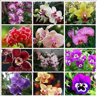 تصویر انواع ارکیده برای پرورش گیاه ارکيده