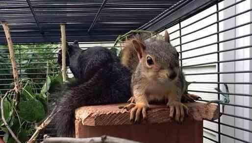 تصویر سنجاب در طرح حیوان خانگی