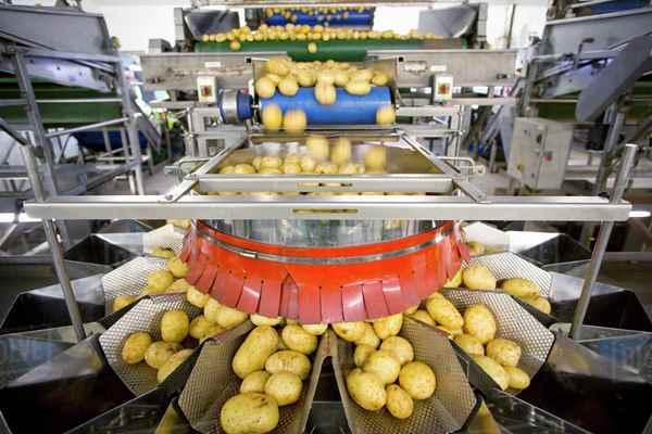 طرح توجیهی تولید چیپس سیب زمینی (فرنچ فرايز)