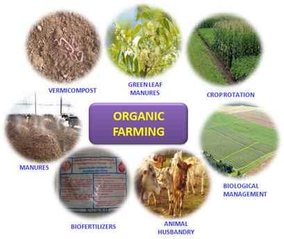 تصاویر کشاورزی ارگانیک