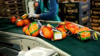 Photo of طرح سورت میوه و بسته بندی آن
