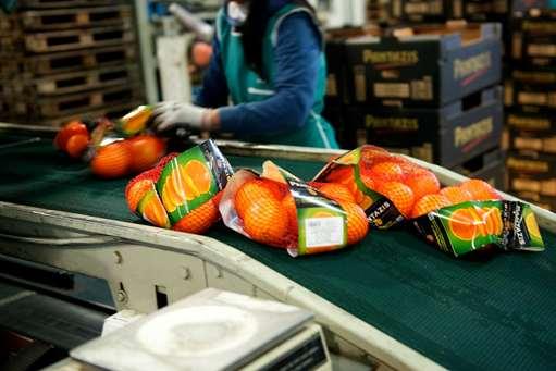 طرح سورت و بسته بندی میوه