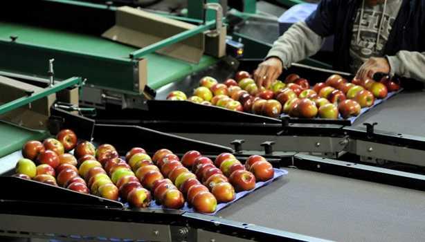 سورت و بسته بندی میوه