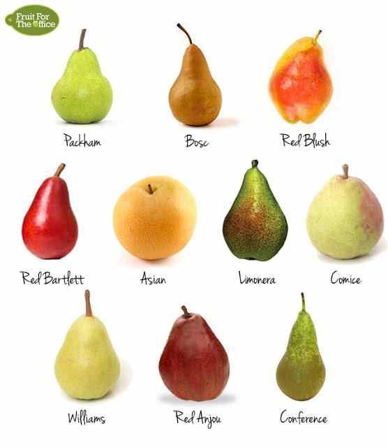 تصویر انواع میوه گلابی