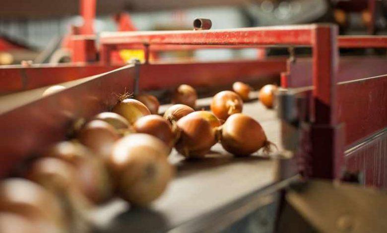 طرح تولید پودر و خلال پیاز