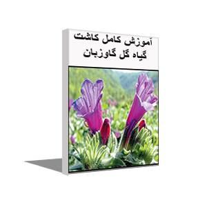 طرح توجيهی پرورش گیاه گاوزبان (سال 97)+آموزش کاشت