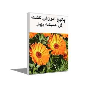 پکیج آموزش کاشت و تولید گل همیشه بهار با سودآوری بالا