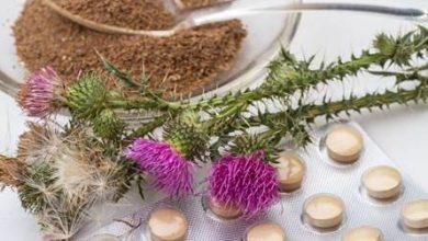 تصویر از طرح کاشت گیاه خارمریم یا ماریتیغال