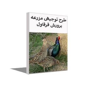 طرح توجیهی پرورش قرقاول گوشتی (خرداد 99) + آموزش رایگان