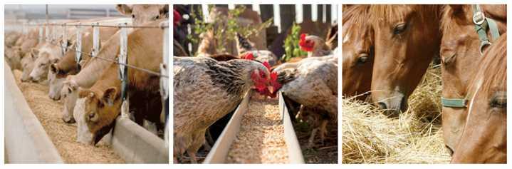 طرح توجیهی توليد مکمل خوراک دام و طيور