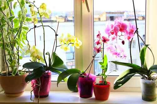 گل و گياهان آپارتمانی