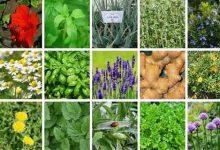 دوره آموزش حضوری و آنلاین گیاهان دارویی